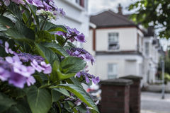 Violet flowers - a street in London. This image shows a street in London with some violet/pink flower Royalty Free Stock Photography