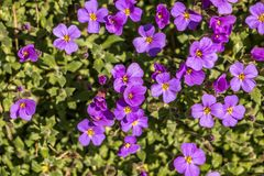 Violet flowers. On the ground Stock Photography