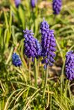 Violet flowers. On the ground Royalty Free Stock Image