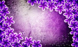 Violet flowers with water drop grunge back ground Stock Photography