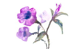 Violet flowers, watercolor painting Stock Images