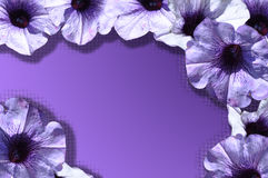 Violet frame Royalty Free Stock Photo