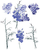Violet french bouquet design vector elements Stock Image