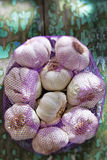 Violet French Garlic Royalty Free Stock Photos