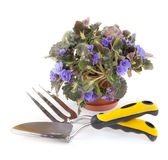 Violet and garden tools Royalty Free Stock Images