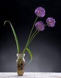 Violet Garlic Flowers in vase Royalty Free Stock Photo