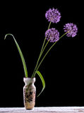 Violet Garlic Flowers in vase Stock Photography