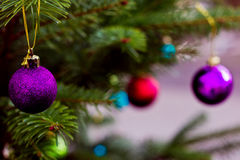 Violet glass ball on Christmas tree. Stock Images