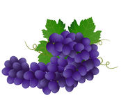 Violet grape Stock Photo