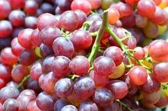 Violet grape Stock Image