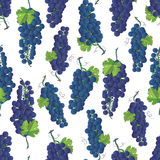 Violet grapes vector seamless pattern Royalty Free Stock Photos