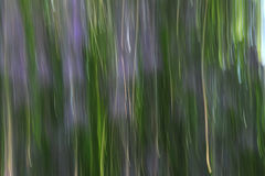 Violet and green Royalty Free Stock Image