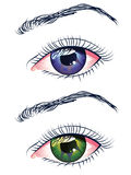 Violet and Green Eyes Royalty Free Stock Image