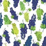 Violet and green grapes vector seamless pattern Royalty Free Stock Photography