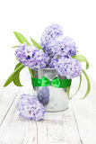 Violet hyacinths in a bucket Stock Photos