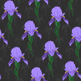 Violet Iris flowers on a dark grey background. Floral seamless p. Pale Iris flowers on a dark grey background. Floral seamless pattern. Shadeless ornament. Plain Royalty Free Stock Image