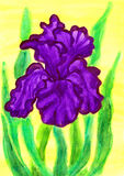 Violet iris, painting. Violet iris, hand painted picture, watercolours Royalty Free Stock Photos