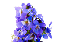 Violet isolated Stock Photos