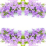 Violet Ixora Royalty Free Stock Photography