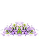 Violet Ixora Royalty Free Stock Image