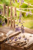 Violet lavender dried on laundry lines in garden. Violet lavender dried on laundry lines in summer garden stock photo