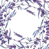 Violet lavender. Floral botanical flower. Wild spring leaf wildflower frame. Aquarelle wildflower for background, texture, wrapper pattern, frame or border stock illustration