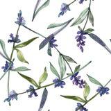 Violet lavender floral botanical flowers. Watercolor background illustration set. Seamless background pattern. royalty free illustration