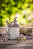 Violet lavender preparation for drying in green garden. On wooden table stock photos