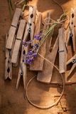 Violet lavender ready to dry in countryside in summer. On wooden table stock photography