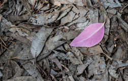 Violet leaf on the ground Stock Photography