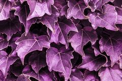 Violet leaves background. Color of the year 2018 purple abstract pattern.  stock images
