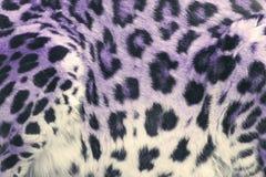 Violet Leopard Spots fotografia stock libera da diritti