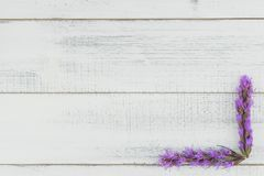 Violet liatris flowers on white wood background royalty free stock image