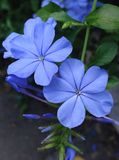 Violet Life Photos libres de droits
