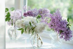 Violet lilac flowers bunch in vase Stock Photos