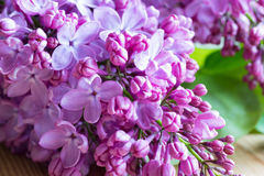 Violet lilac flowers on a wooden table royalty free stock photos