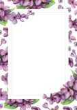 Violet lilac on white flower background. Stock Photos