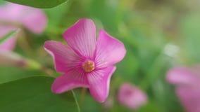 Violet little flower, macro closeup Stock Photos