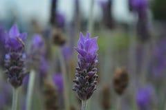 Violet3 Stock Images