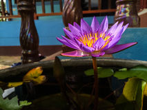 Violet Lotus Flower. / Mobile photography Royalty Free Stock Image