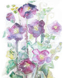 Violet mallow flowers. Watercolor hand painted illustration of violet mallow flowers on long stems. Royalty Free Stock Photo