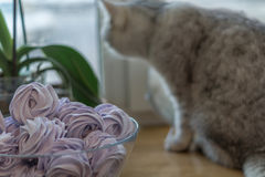 Violet marshmallow and gray cat. Violet marshmallow in form of rose in glass bowl and near gray cat is watching through the window Royalty Free Stock Image
