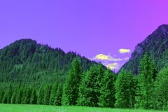 Violet mountain forest Royalty Free Stock Photo
