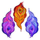 Violet, orange and blue painted vector peacock feathers. Stock Photos