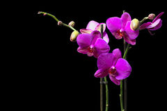 Violet orchid Stock Photo