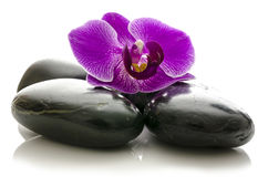 Violet orchid on black spa stones Stock Image