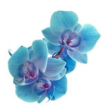 Violet orchid Stock Photography