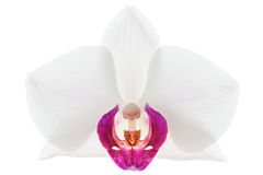 Violet orchid flower Royalty Free Stock Photo