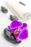 Violet orchid flower on a spa stone Stock Photos