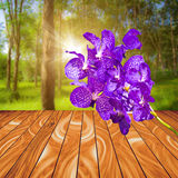 Violet orchid flower on wood plank with colorful blur nature bac Stock Image
